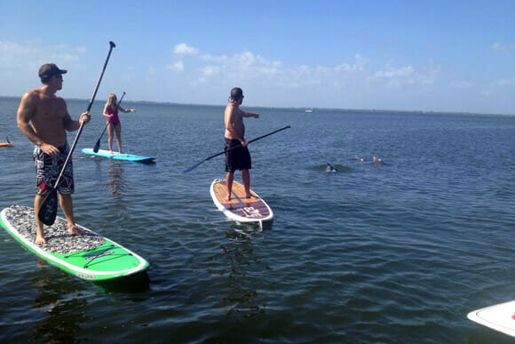 Stand up paddle with dolphins near Cocoa Beach, FL