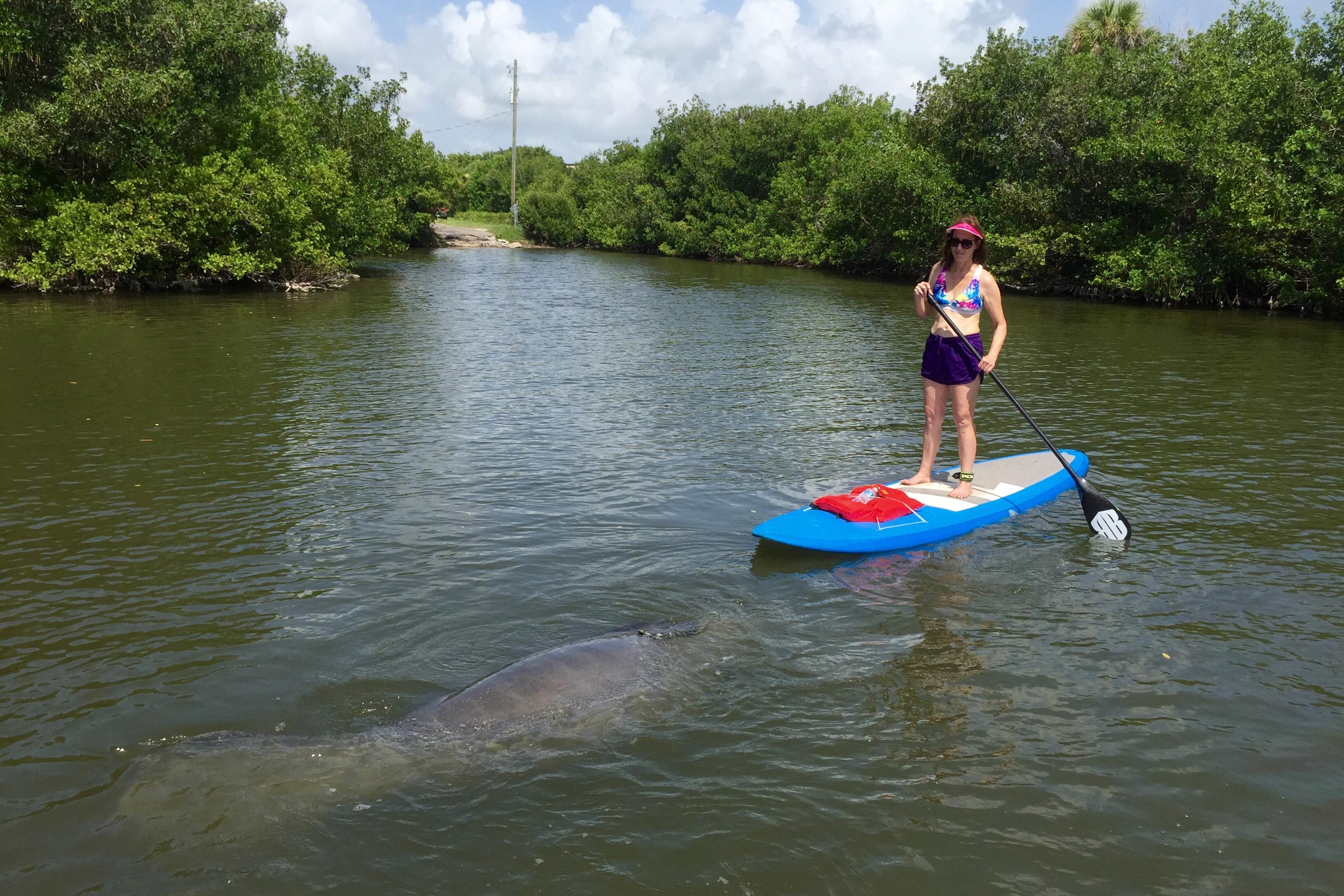 sobe surf manatee eco tour paddle board and kayak tours cocoa beach florida orlando area